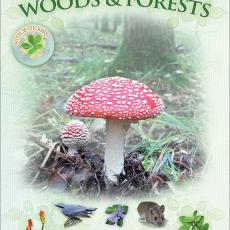 Let's Look in Woods and Forests Book